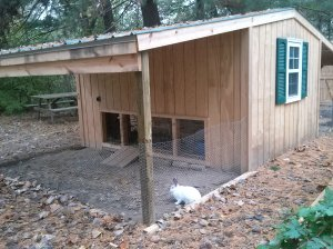 Mopsey the bunny loves to have access to her new yard.