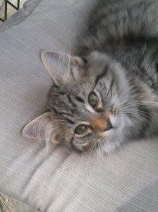 Since we have a barn, we had to add barn kitties.  Meet Posey.